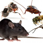 Effective Pest Control Services